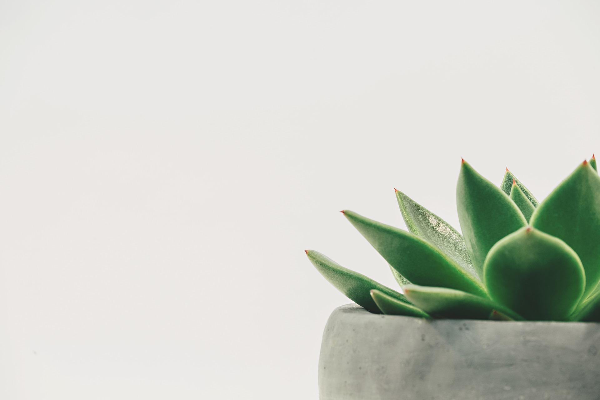 plant-2004483_1920