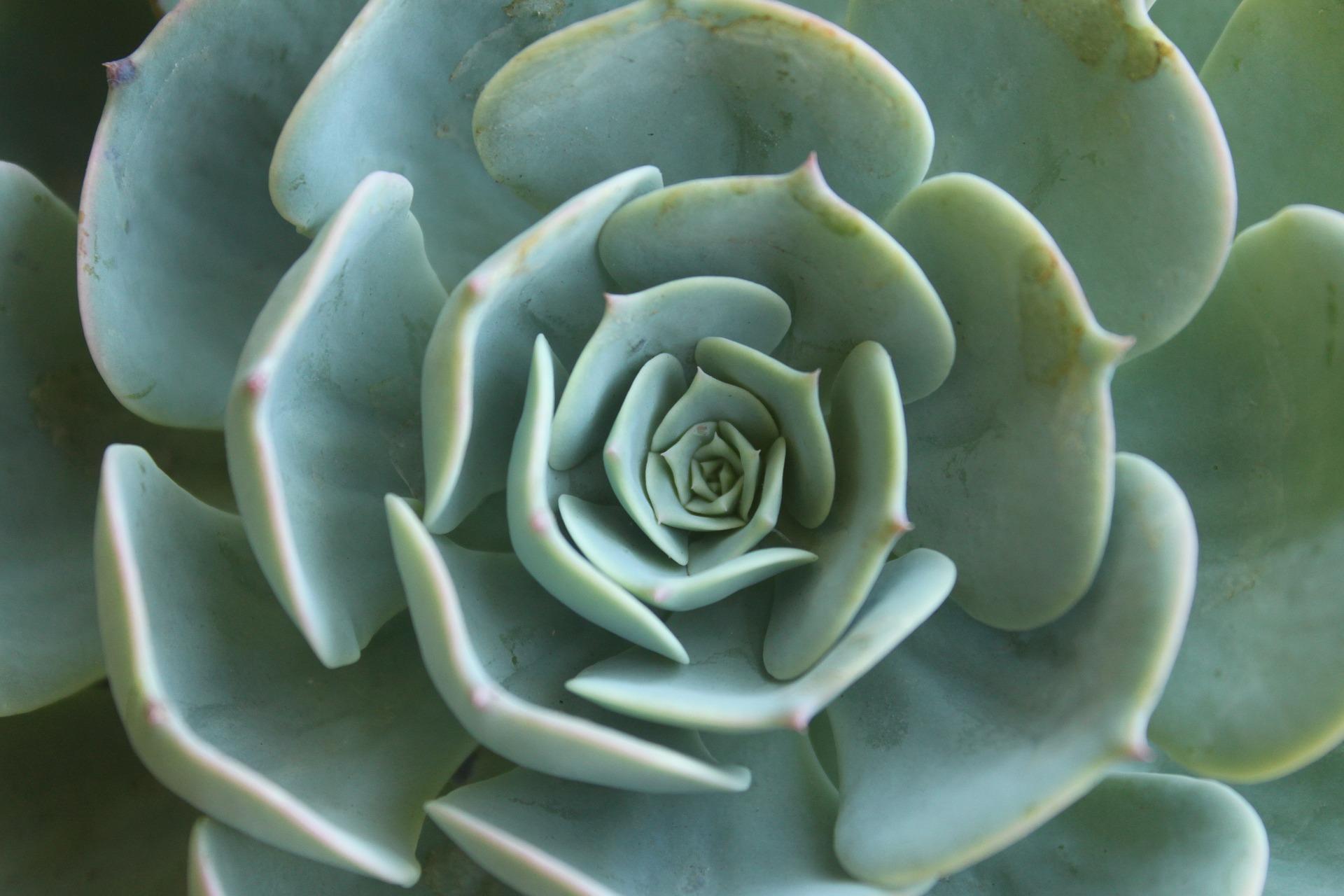succulent-2763668_1920